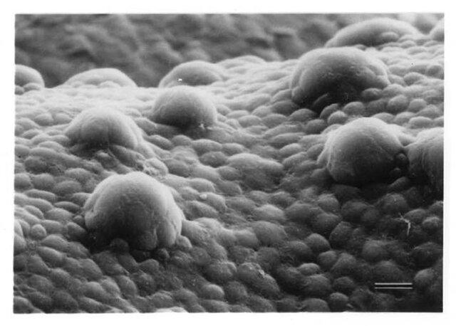 کروناویروس مستقیما بر حس چشایی اثر نمیگذارد